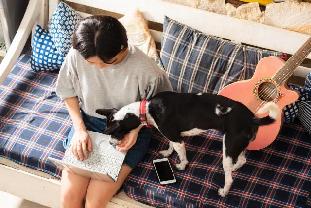 室内で愛犬の相手をしながらパソコンを操作する女性
