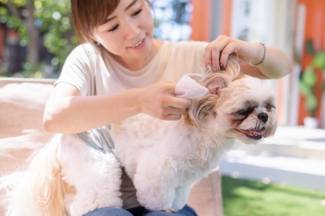犬の世話をする女性