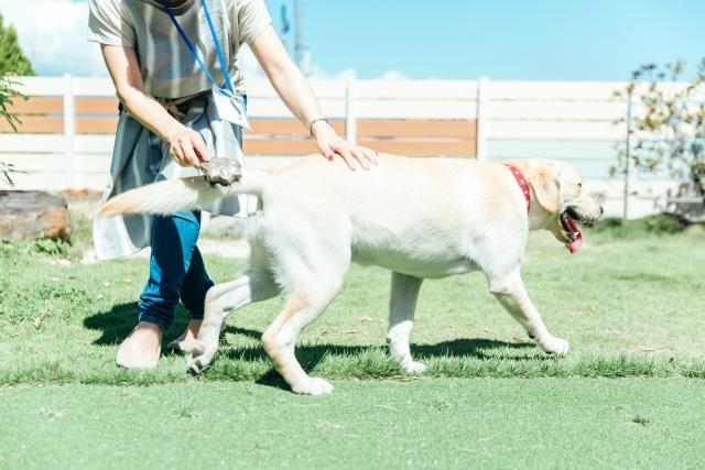 犬の世話をするペットシッターの女性