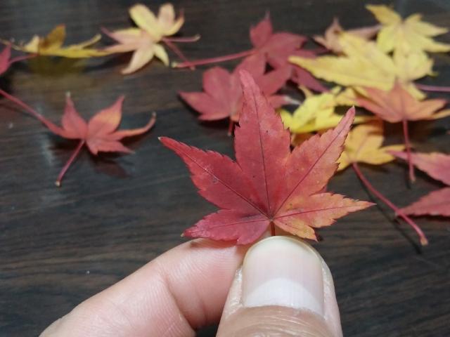 集めた落ち葉