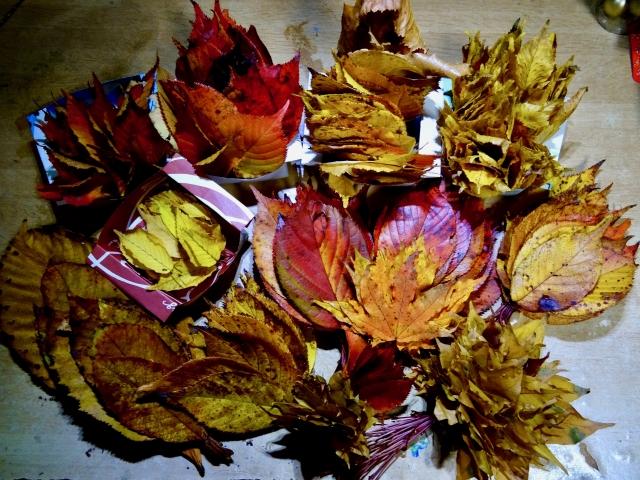 いろいろな落ち葉